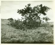Thumbnail image of A position manned with the later M1918A2 BAR