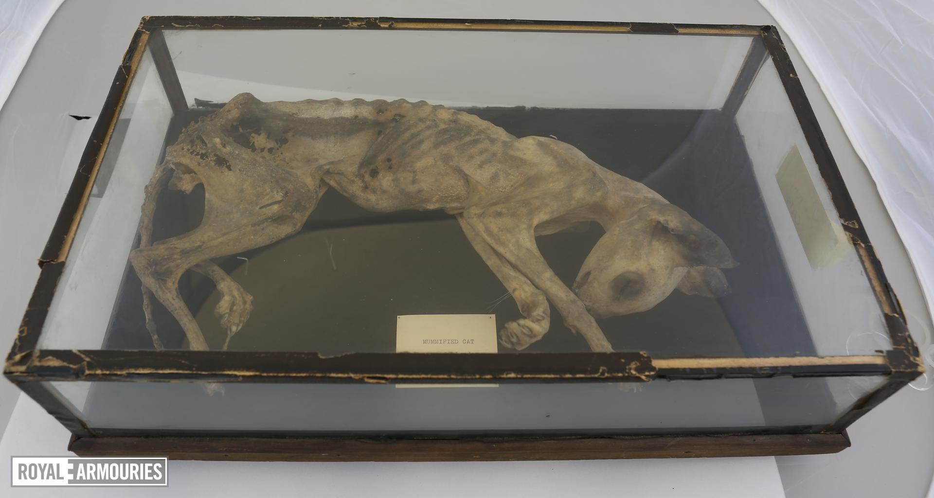 Mummified cat. XVIII.897