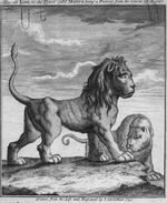 Thumbnail image of Print The Old Lion in the Tower call'd Marco....