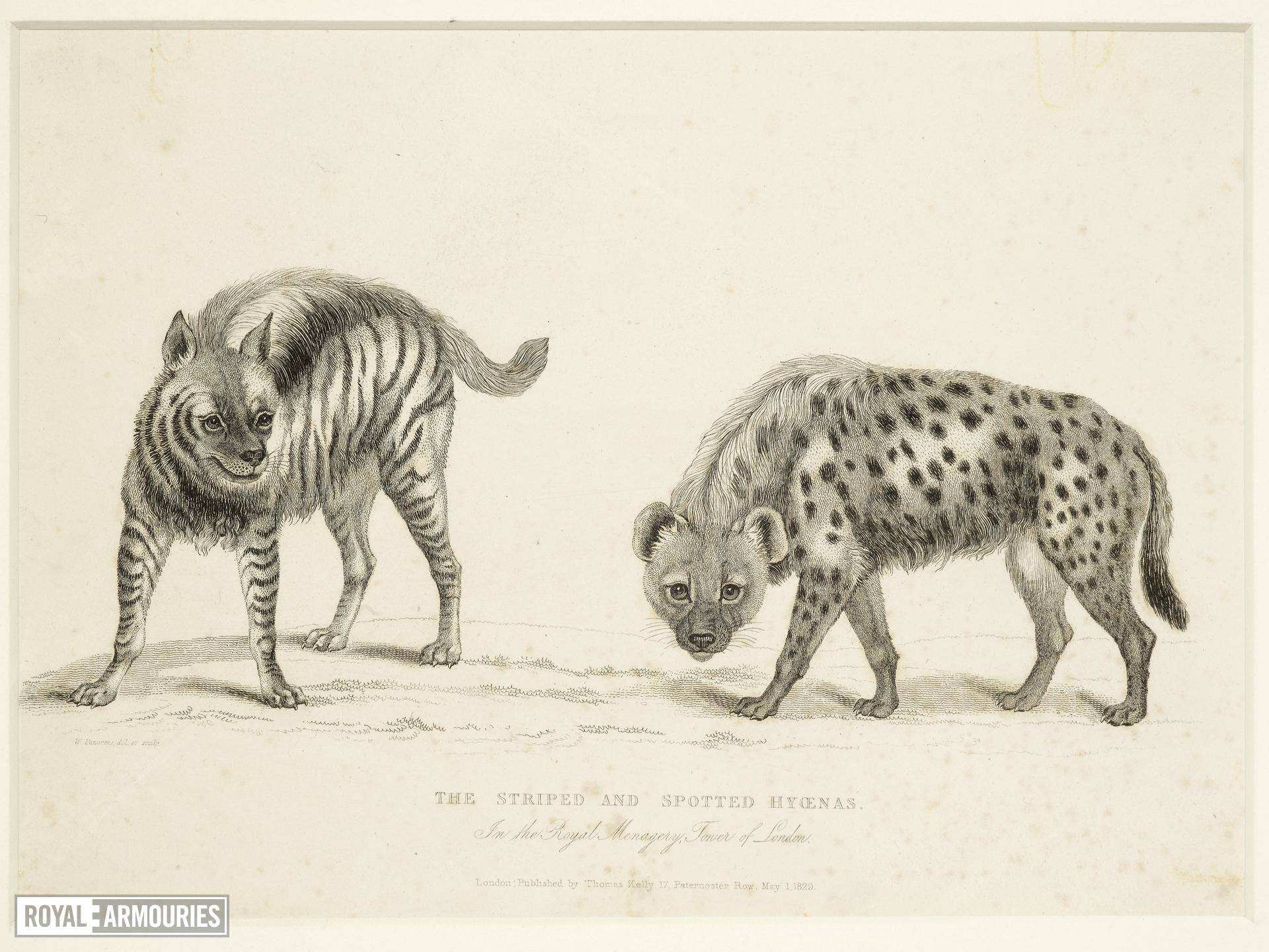 Print Entitled 'The Striped and Spotted Hyoenas', dated 1 May, 1830.