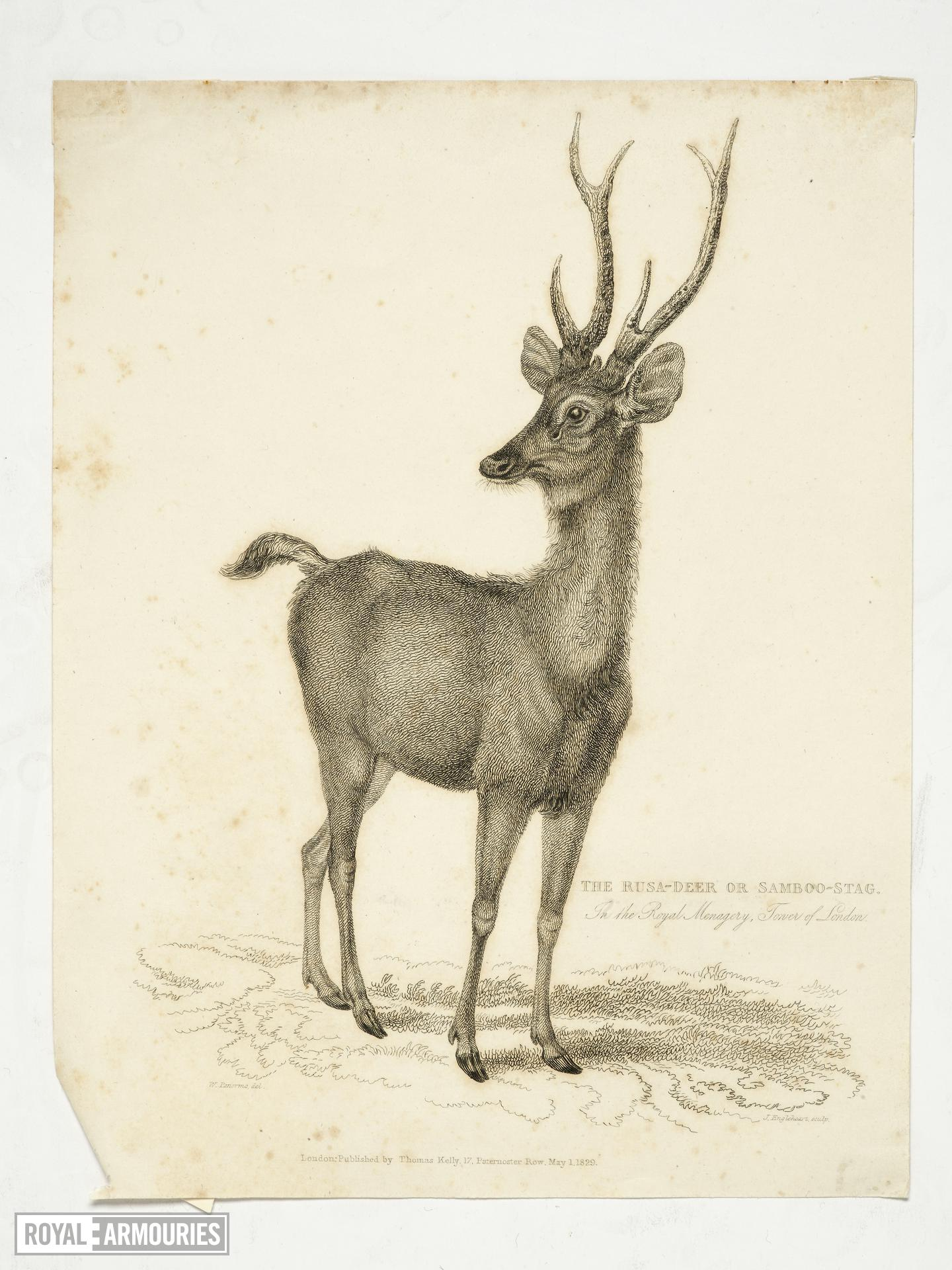 Print Entitled 'Rusa Deer', dated 1 May,  1830.