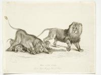 Thumbnail image of Print Entitled 'The Lion Cubs in the Royal Menagery, Tower of London', dated 1 May, 1830.