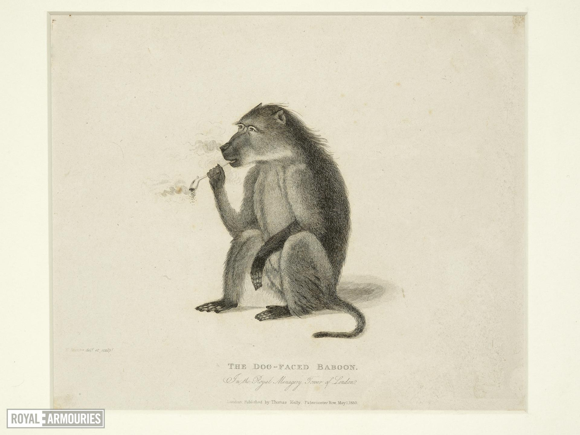 Print Entitled 'The Dog-Faced Baboon in the Royal Menagery, Tower of London', dated 1 May, 1830.